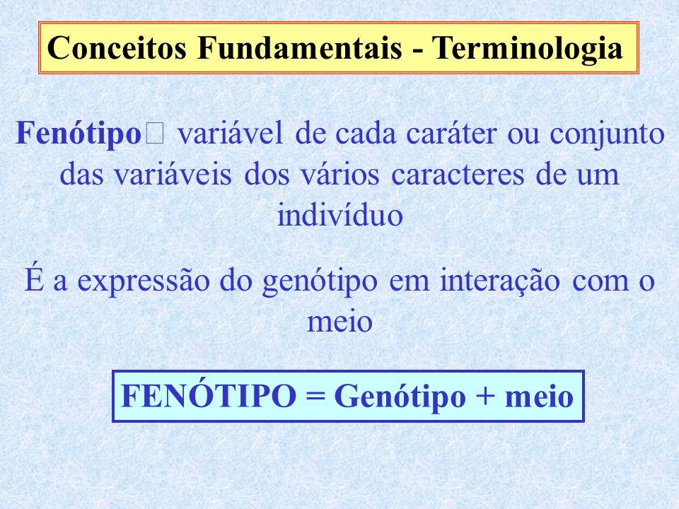 Conceitos Fundamentais - Terminologia Fenótipo variável de cada caráter ou conjunto das variáveis dos vários caracteres de um indivíduo É a expressão do genótipo em interação com o meio FENÓTIPO = Genótipo + meio