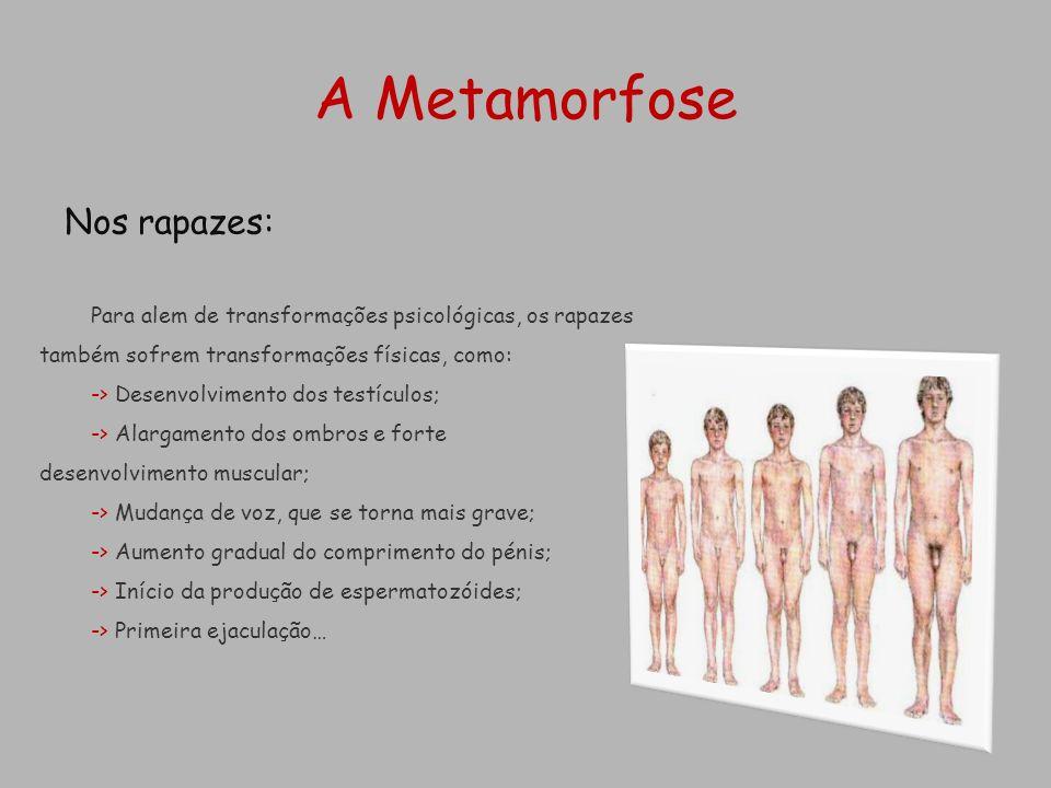 A Metamorfose Nos rapazes: Para alem de transformações psicológicas, os rapazes também sofrem transformações físicas, como: -> Desenvolvimento dos tes