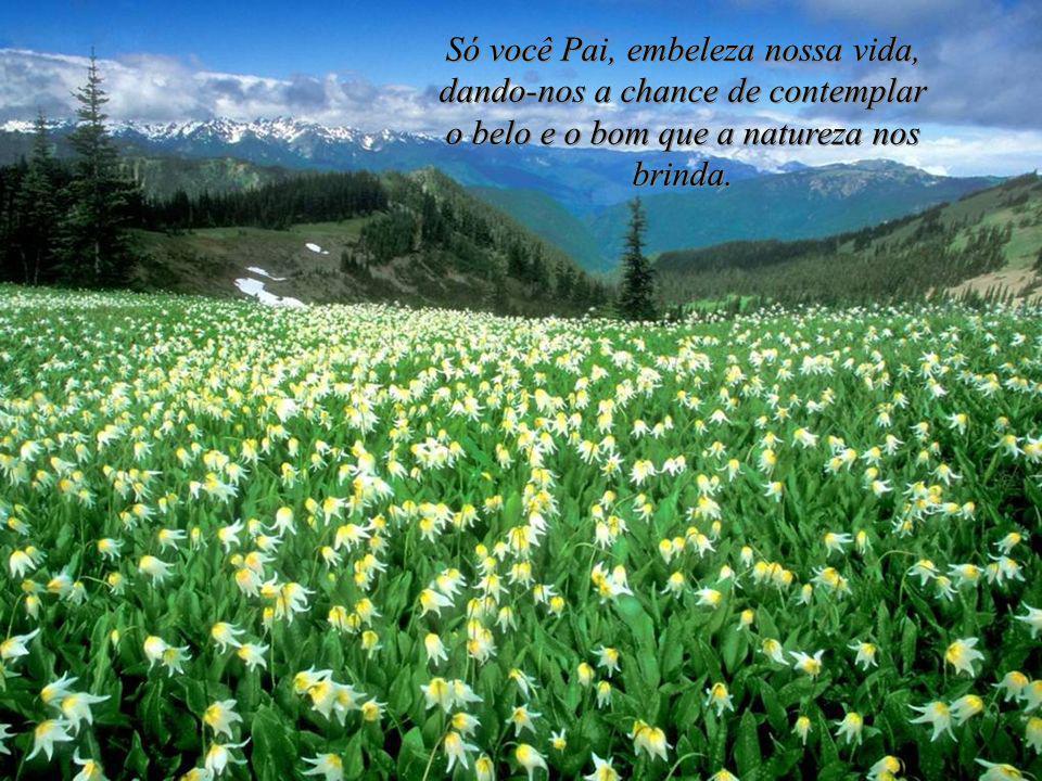 Agradecer a Deus é nosso dever. Viver e ser feliz é responsabilidade de cada um. Sebastião Gomes Fernandes. Viva a vida. Ame e deixe-se amar.