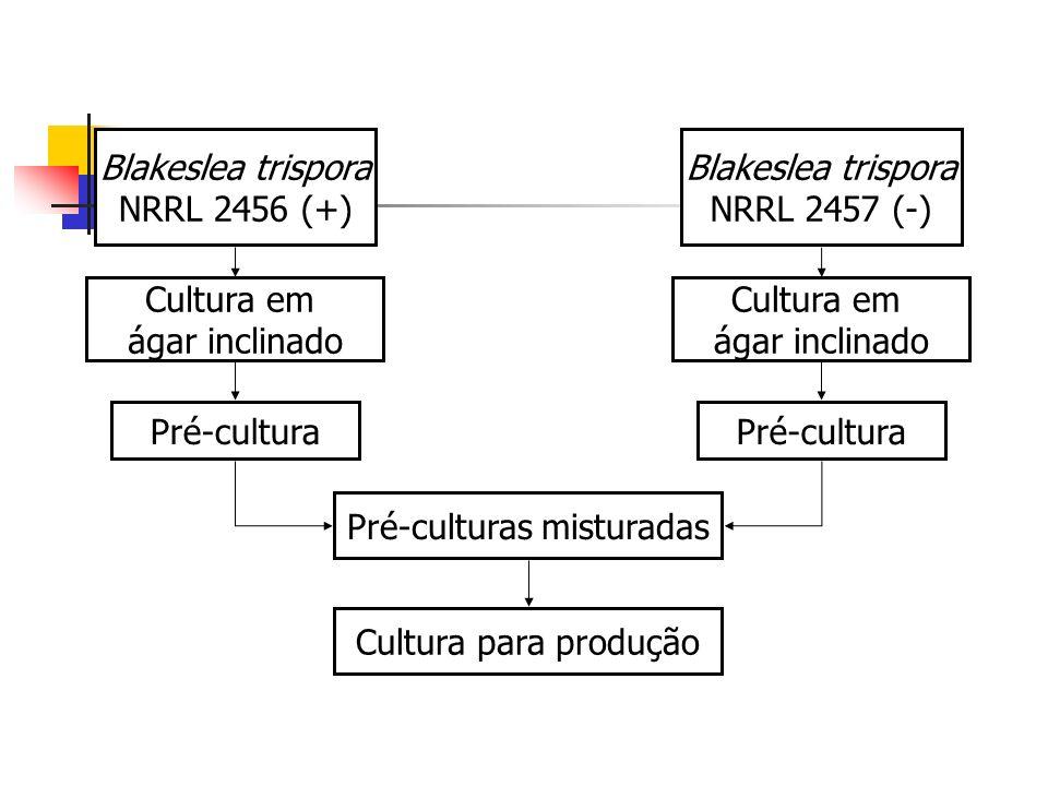 Blakeslea trispora NRRL 2456 (+) Blakeslea trispora NRRL 2457 (-) Cultura em ágar inclinado Cultura em ágar inclinado Pré-cultura Pré-culturas mistura