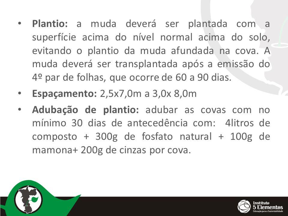 Plantio: a muda deverá ser plantada com a superfície acima do nível normal acima do solo, evitando o plantio da muda afundada na cova. A muda deverá s