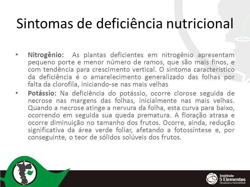 Sintomas de deficiência nutricional Nitrogênio: As plantas deficientes em nitrogênio apresentam pequeno porte e menor número de ramos, que são mais fi