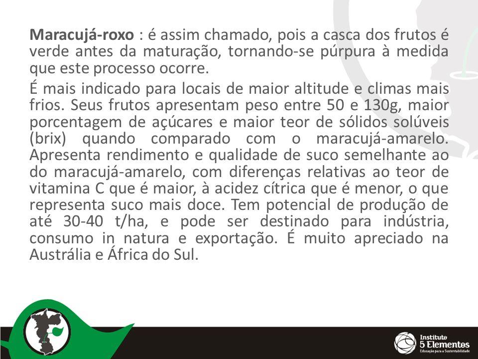 Maracujá-roxo : é assim chamado, pois a casca dos frutos é verde antes da maturação, tornando-se púrpura à medida que este processo ocorre. É mais ind