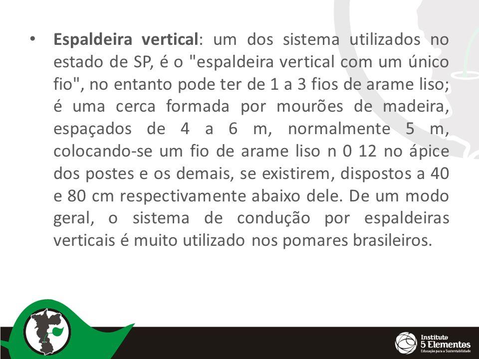 Espaldeira vertical: um dos sistema utilizados no estado de SP, é o