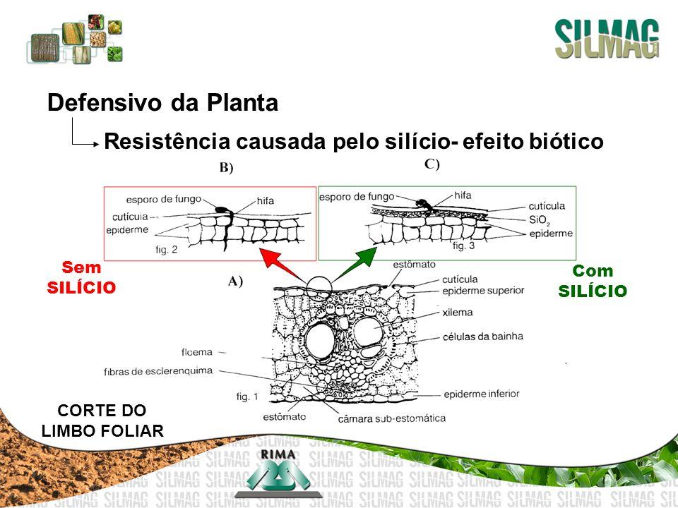 Resistência causada pelo silício- efeito biótico CORTE DO LIMBO FOLIAR Com SILÍCIO Sem SILÍCIO