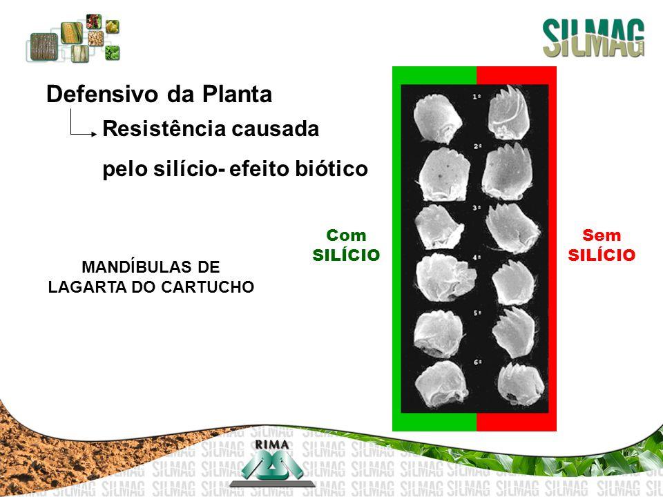 Defensivo da Planta Resistência causada pelo silício- efeito biótico Com SILÍCIO Sem SILÍCIO MANDÍBULAS DE LAGARTA DO CARTUCHO