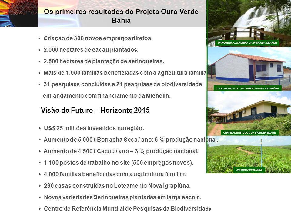 Os primeiros resultados do Projeto Ouro Verde Bahia Criação de 300 novos empregos diretos. 2.000 hectares de cacau plantados. 2.500 hectares de planta