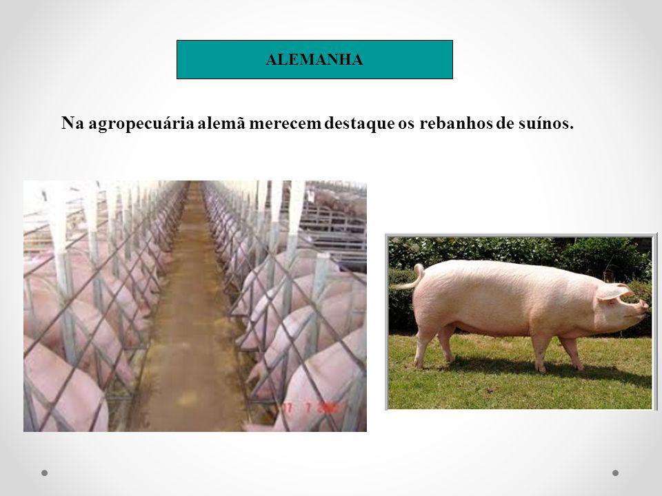 Na agropecuária alemã merecem destaque os rebanhos de suínos. ALEMANHA