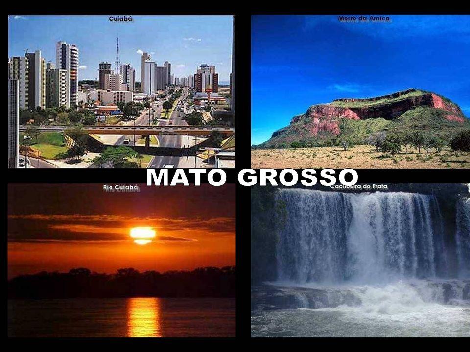 - Mesmo sendo um país em desenvolvimento, os internautas brasileiros - Mesmo sendo um país em desenvolvimento, os internautas brasileiros representam