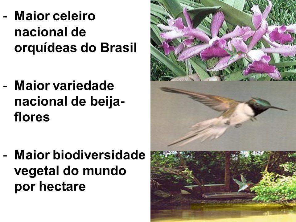 - Primeiro produtor de coco verde do Brasil - Primeiro produtor de mamão papaia do Brasil