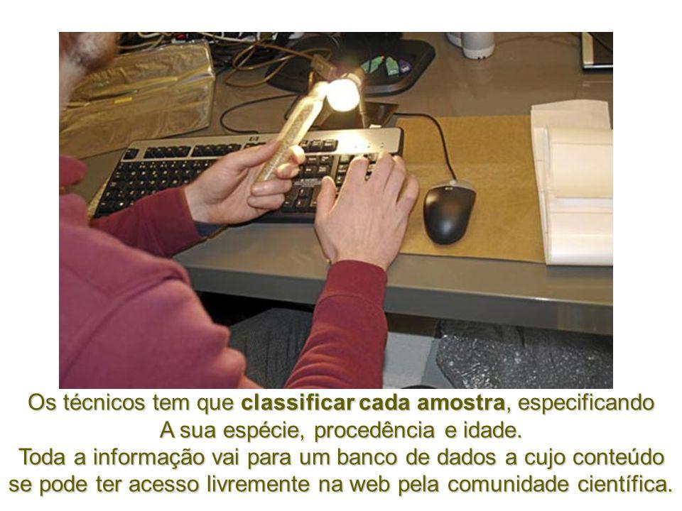 No fim do corredor, encontra-se a sala de controle onde os técnicos da Arca registam nos computadores do centro cada amostra de semente que vai chegan
