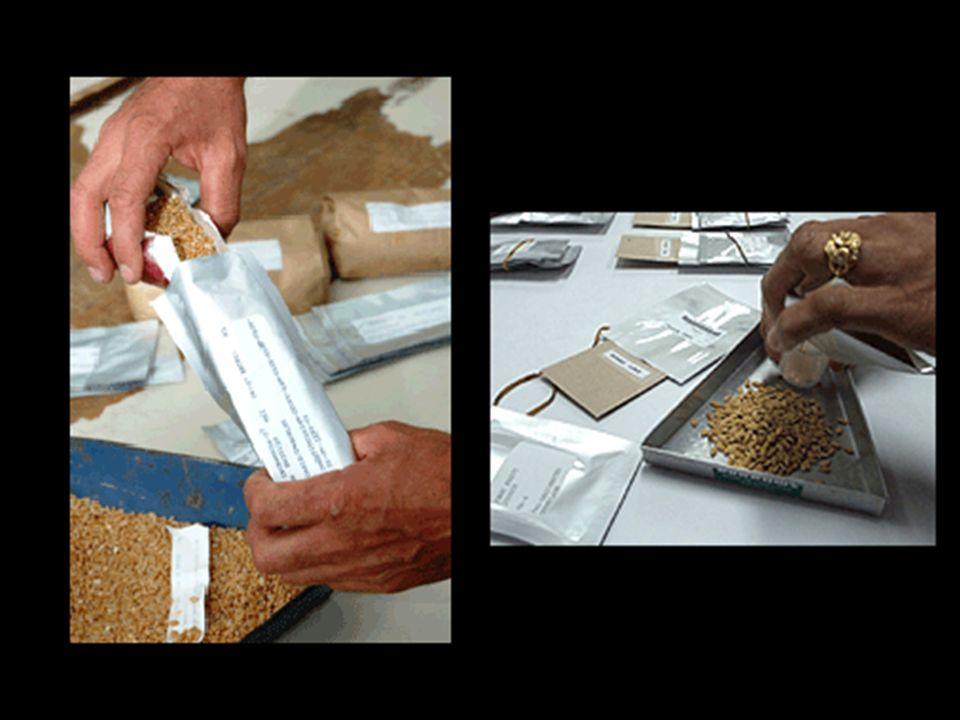 Na actualidade, já existem mais de 1.000 bancos de sementes por todo o mundo. No entanto, muitos deles, sobretudo nos países em vias de desenvolviment