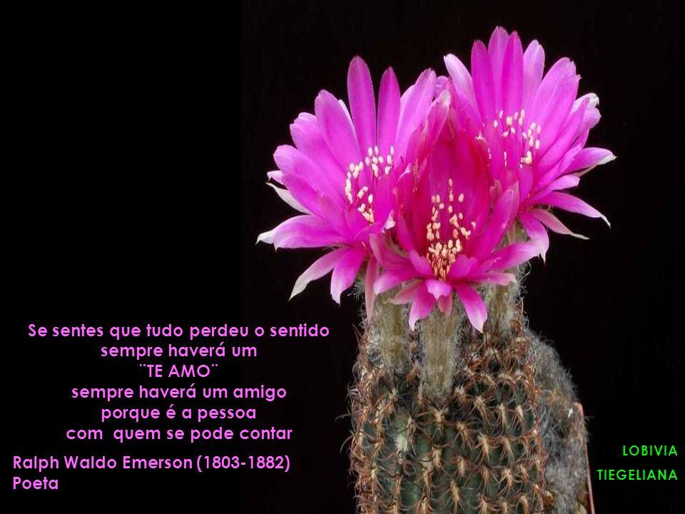LOBIVIA LOBIVIATIEGELIANA Se sentes que tudo perdeu o sentido sempre haverá um ¨TE AMO¨ sempre haverá um amigo porque é a pessoa com quem se pode contar Ralph Waldo Emerson (1803-1882) Poeta