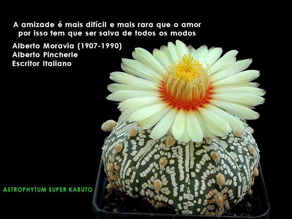 ASTROPHYTUM SUPER KABUTO A amizade é mais difícil e mais rara que o amor por isso tem que ser salva de todos os modos Alberto Moravia (1907-1990) Alberto Pincherle Escritor Italiano