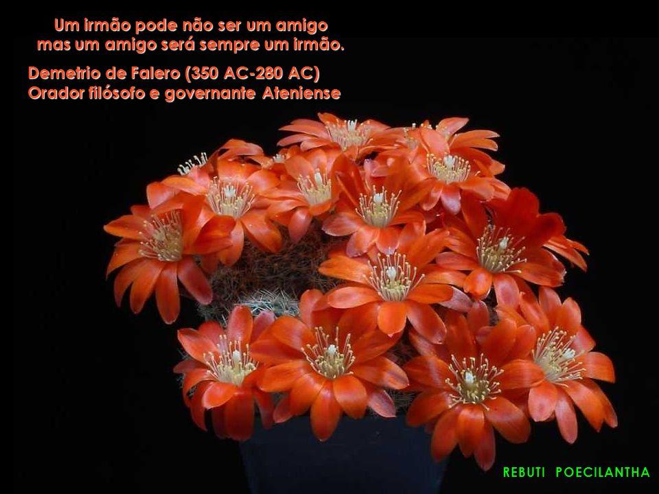 ASTROPHYTUM SUPER KABUTO A amizade é mais difícil e mais rara que o amor por isso tem que ser salva de todos os modos Alberto Moravia (1907-1990) Albe