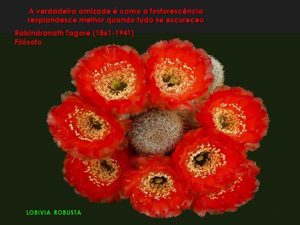 LOBIVIA ROBUSTA A verdadeira amizade é como a fosforescência resplandesce melhor quando tudo se escureceu Rabindranath Tagore (1861-1941) Filósofo
