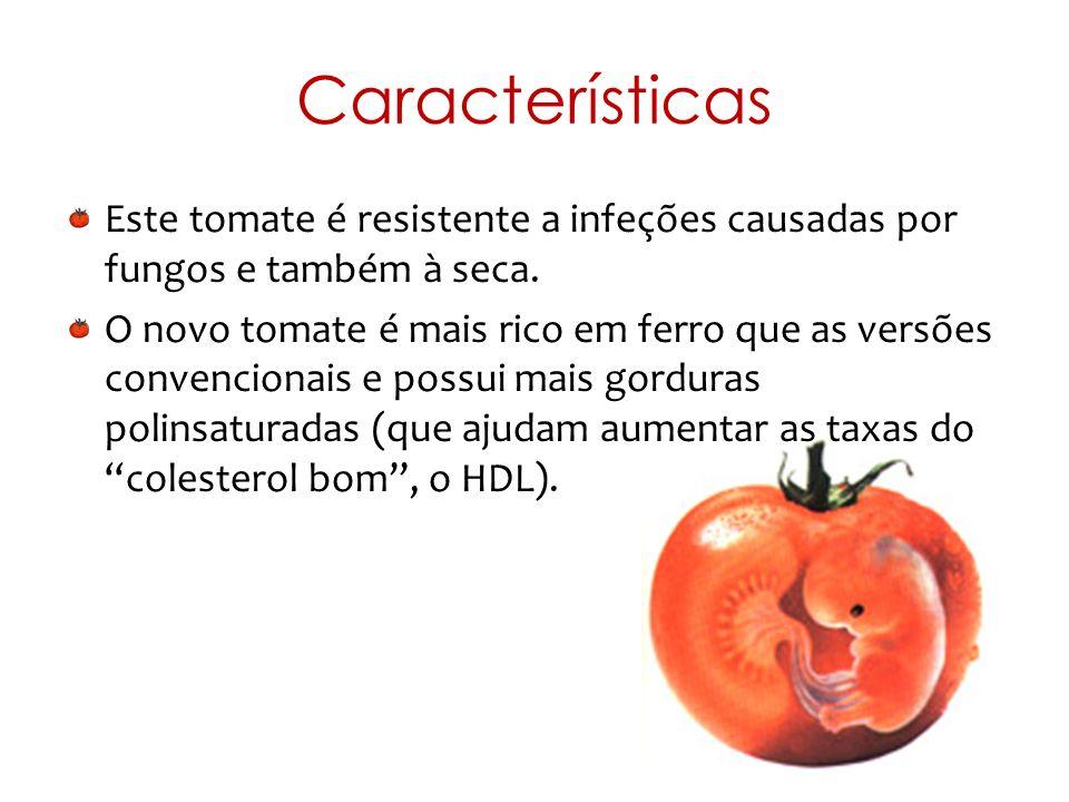Características Este tomate é resistente a infeções causadas por fungos e também à seca. O novo tomate é mais rico em ferro que as versões convenciona