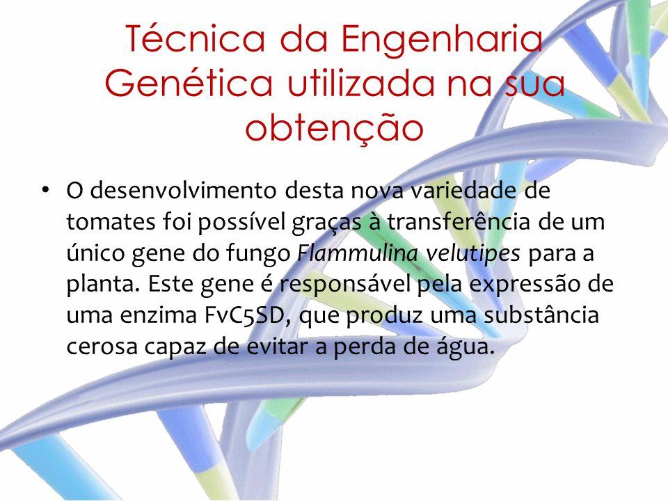 O desenvolvimento desta nova variedade de tomates foi possível graças à transferência de um único gene do fungo Flammulina velutipes para a planta. Es