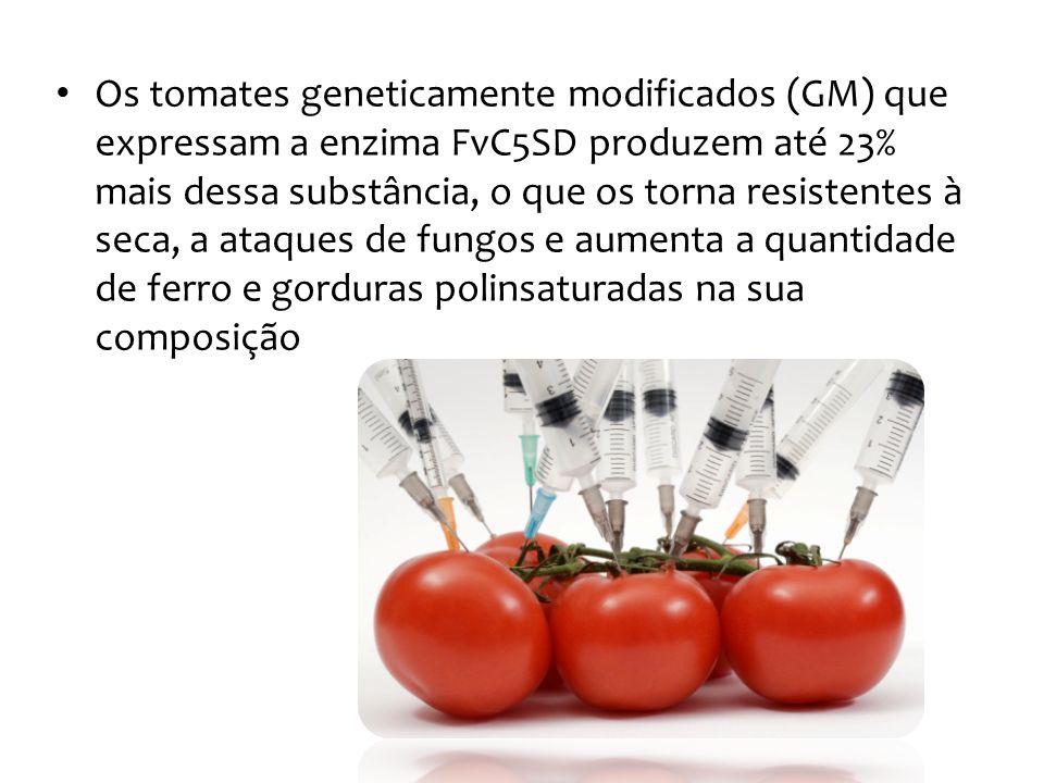 Os tomates geneticamente modificados (GM) que expressam a enzima FvC5SD produzem até 23% mais dessa substância, o que os torna resistentes à seca, a a