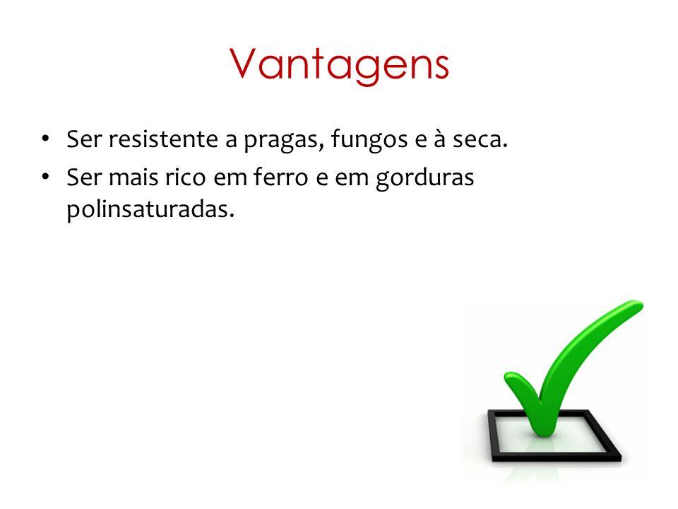 Vantagens Ser resistente a pragas, fungos e à seca. Ser mais rico em ferro e em gorduras polinsaturadas.