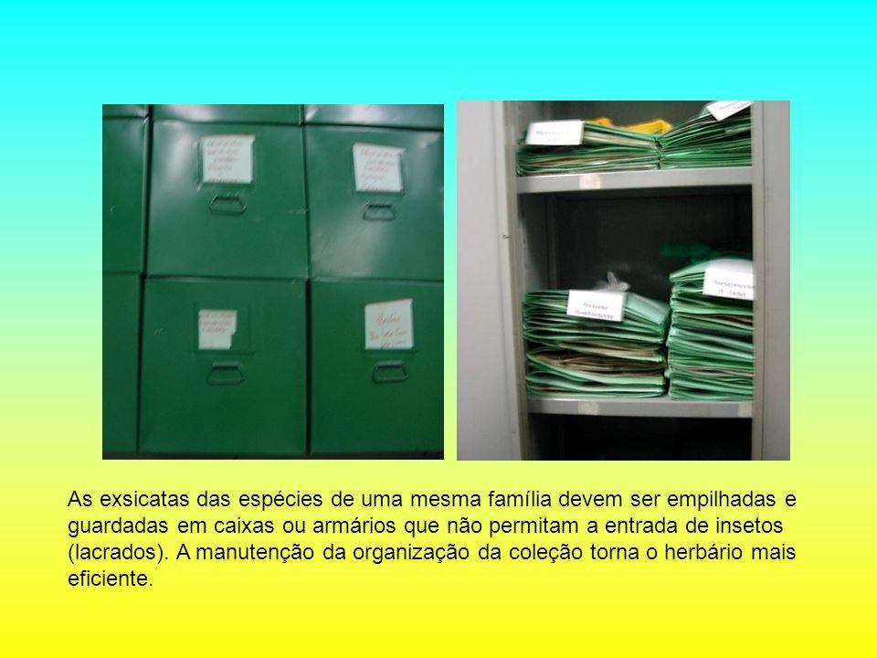 As exsicatas das espécies de uma mesma família devem ser empilhadas e guardadas em caixas ou armários que não permitam a entrada de insetos (lacrados)