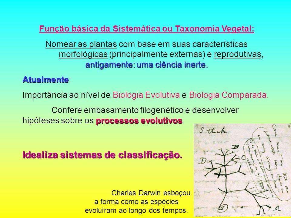Função básica da Sistemática ou Taxonomia Vegetal: antigamente: uma ciência inerte. Nomear as plantas com base em suas características morfológicas (p