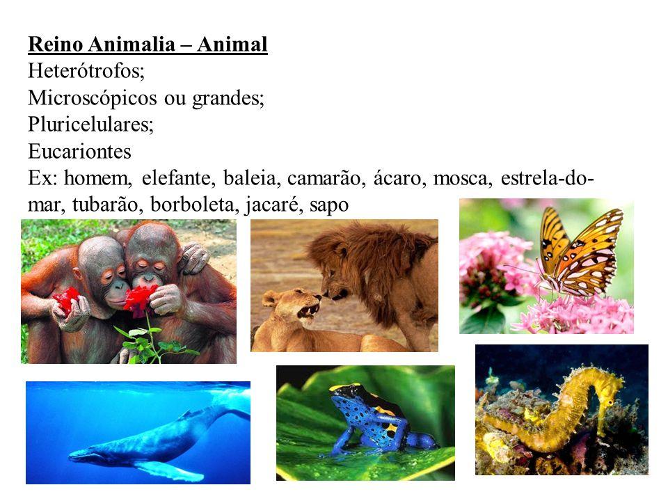 Reino Animalia – Animal Heterótrofos; Microscópicos ou grandes; Pluricelulares; Eucariontes Ex: homem, elefante, baleia, camarão, ácaro, mosca, estrel