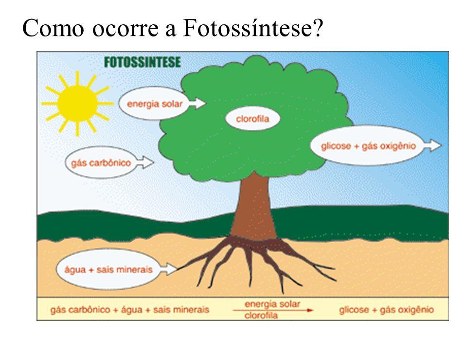 Como ocorre a Fotossíntese?