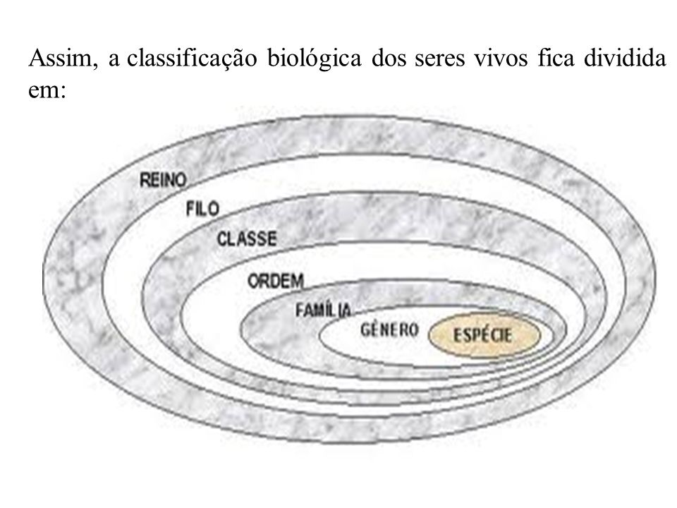 Assim, a classificação biológica dos seres vivos fica dividida em: