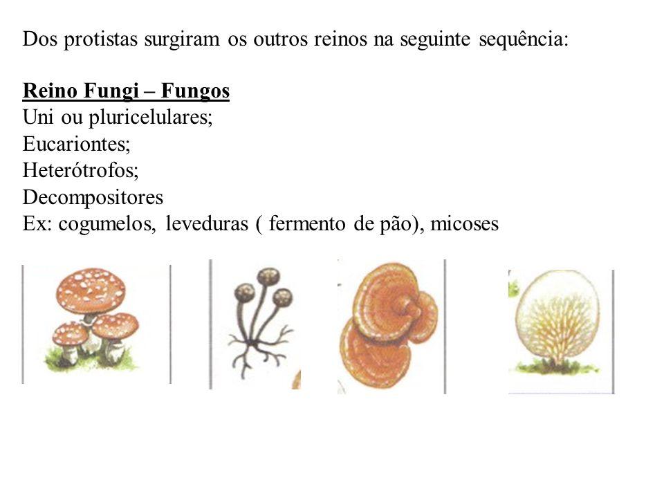Dos protistas surgiram os outros reinos na seguinte sequência: Reino Fungi – Fungos Uni ou pluricelulares; Eucariontes; Heterótrofos; Decompositores E