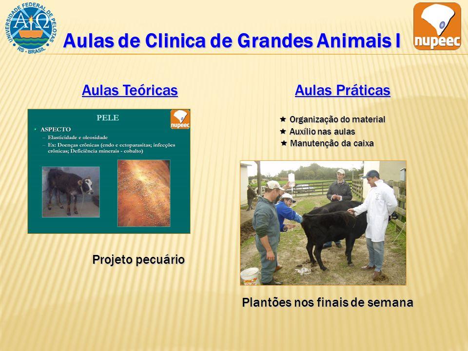 Aulas de Clinica de Grandes Animais I Aulas Teóricas Aulas Práticas Organização do material Organização do material Auxílio nas aulas Auxílio nas aula