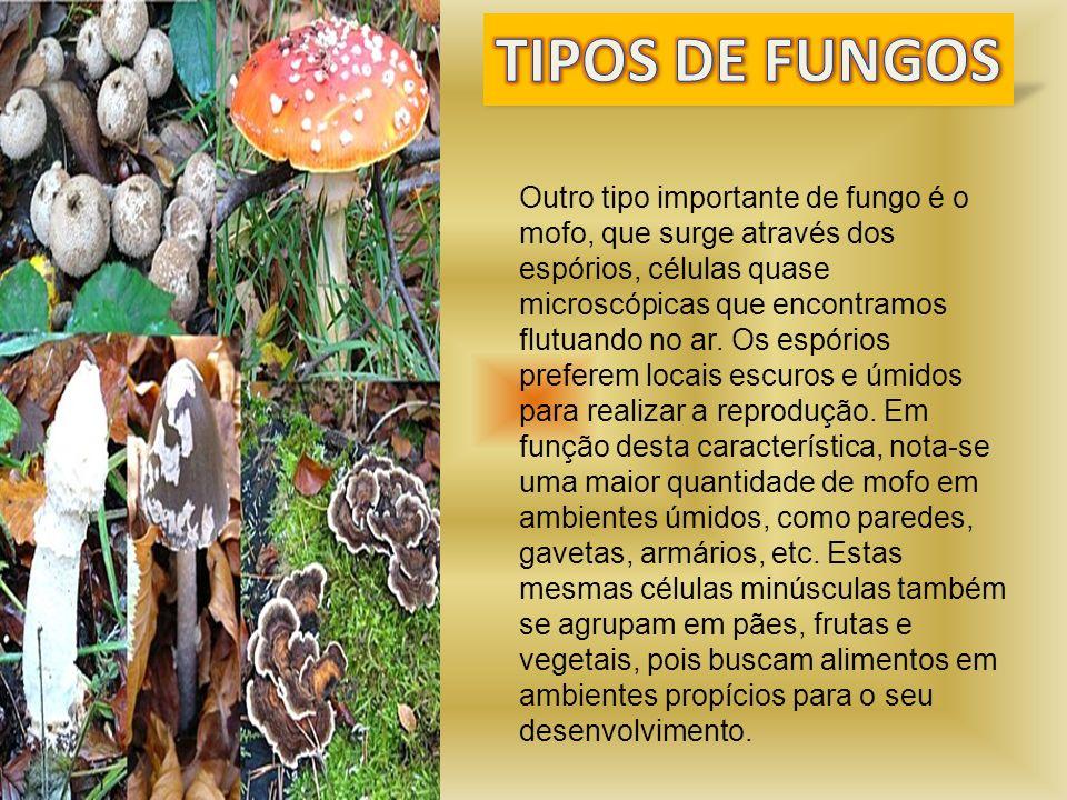 Outro tipo importante de fungo é o mofo, que surge através dos espórios, células quase microscópicas que encontramos flutuando no ar. Os espórios pref