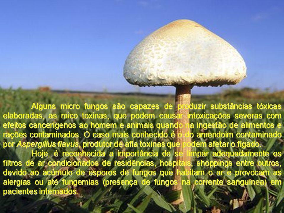 Alguns micro fungos são capazes de produzir substâncias tóxicas elaboradas, as mico toxinas, que podem causar intoxicações severas com efeitos cancerí