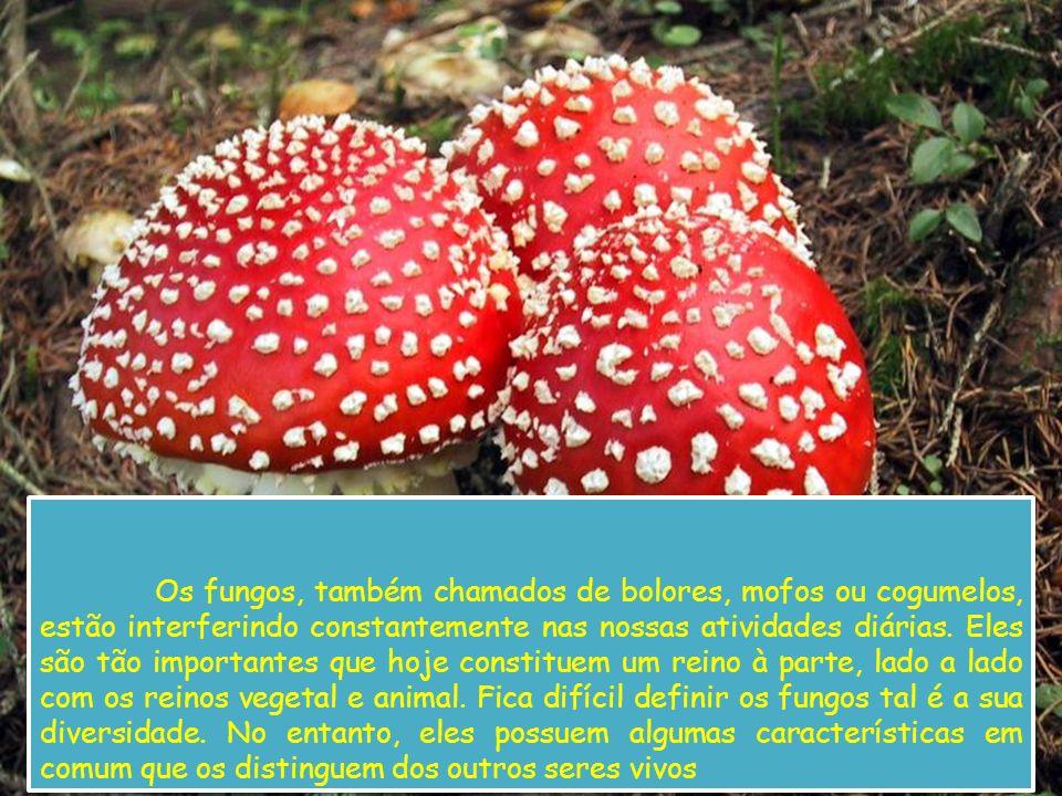 Os fungos, também chamados de bolores, mofos ou cogumelos, estão interferindo constantemente nas nossas atividades diárias. Eles são tão importantes q