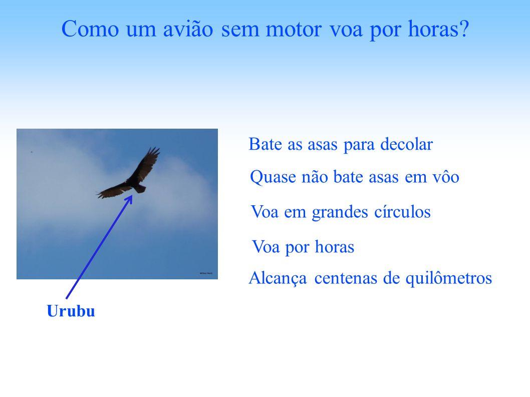 Como um avião sem motor voa por horas? Urubu Bate as asas para decolar Quase não bate asas em vôo Voa em grandes círculos Voa por horas Alcança centen