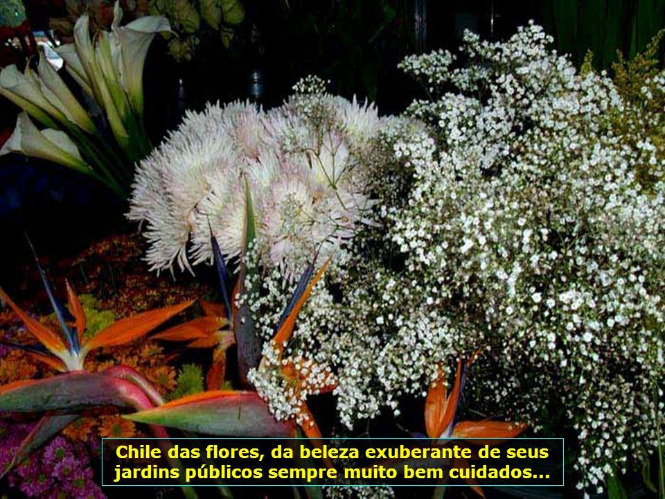 Chile das flores, da beleza exuberante de seus jardins públicos sempre muito bem cuidados...