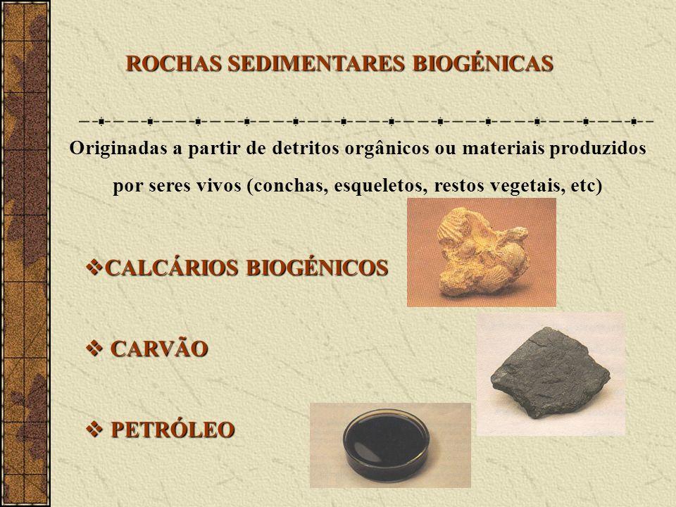 ROCHAS SEDIMENTARES BIOGÉNICAS Originadas a partir de detritos orgânicos ou materiais produzidos por seres vivos (conchas, esqueletos, restos vegetais, etc) CALCÁRIOS BIOGÉNICOS CALCÁRIOS BIOGÉNICOS CARVÃO CARVÃO PETRÓLEO PETRÓLEO