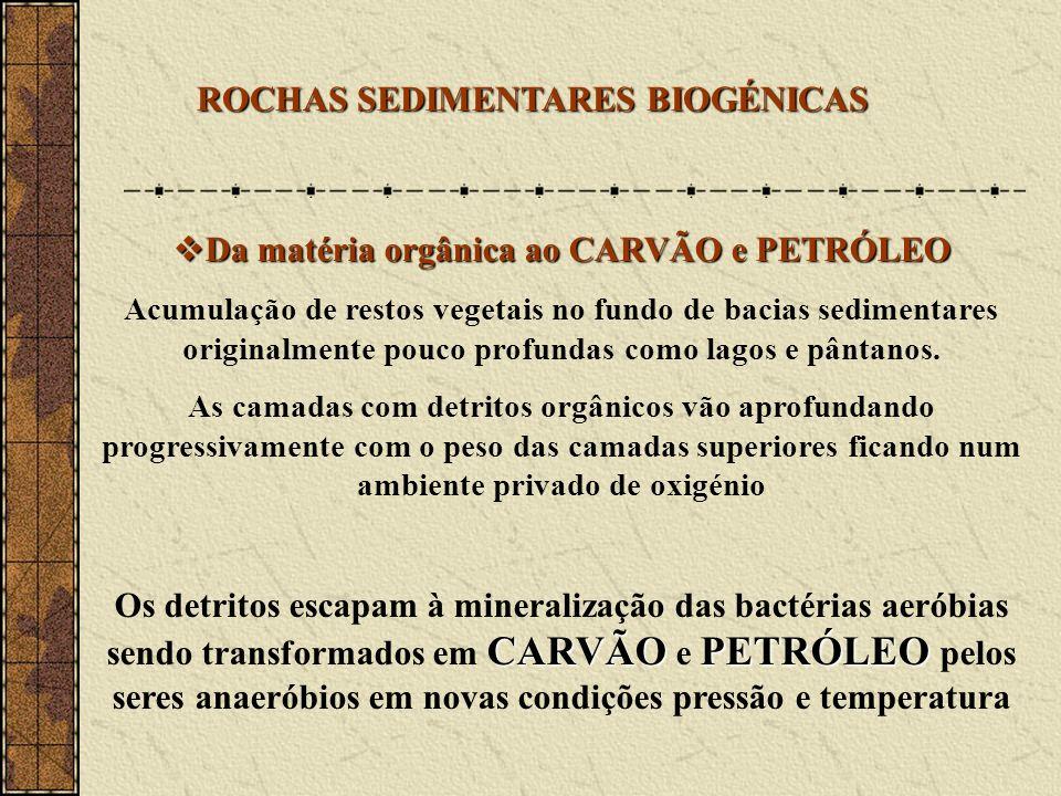 Da matéria orgânica ao CARVÃO e PETRÓLEO Da matéria orgânica ao CARVÃO e PETRÓLEO Acumulação de restos vegetais no fundo de bacias sedimentares originalmente pouco profundas como lagos e pântanos.