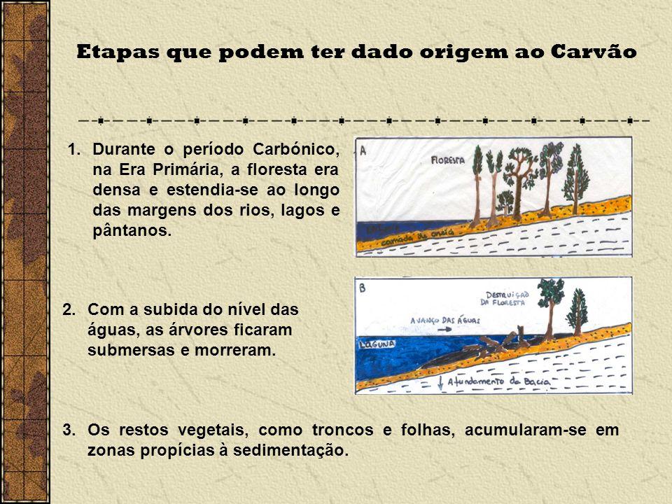 Etapas que podem ter dado origem ao Carvão 1.Durante o período Carbónico, na Era Primária, a floresta era densa e estendia-se ao longo das margens dos rios, lagos e pântanos.