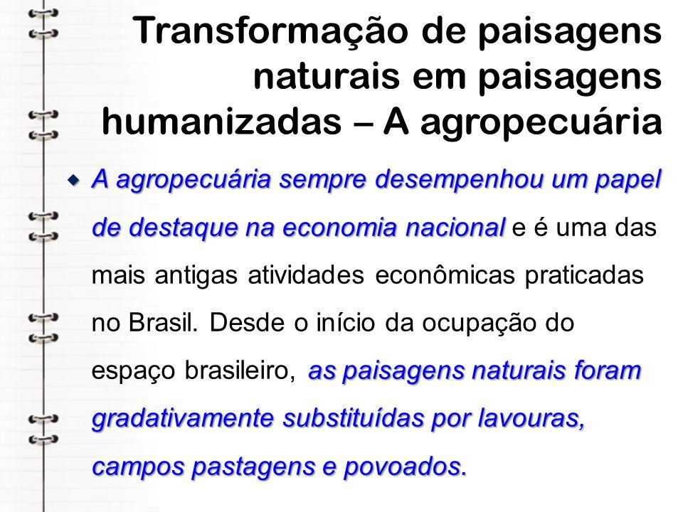 Extrativismo vegetal e comprometimento do ambiente O extrativismo vegetal é a mais antiga atividade econômica praticada em todo o território brasileiro, e de grande importância para a geração de empregos.