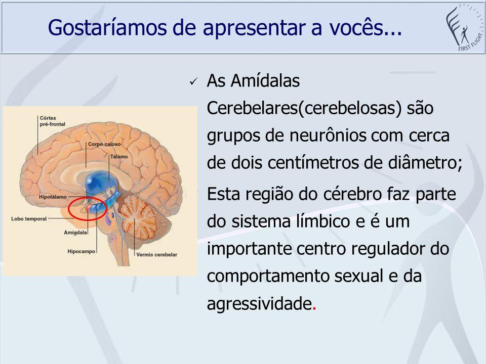 Gostaríamos de apresentar a vocês... As Amídalas Cerebelares(cerebelosas) são grupos de neurônios com cerca de dois centímetros de diâmetro; Esta regi
