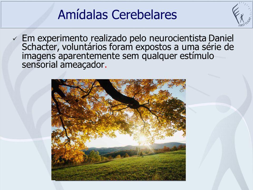 Amídalas Cerebelares Em experimento realizado pelo neurocientista Daniel Schacter, voluntários foram expostos a uma série de imagens aparentemente sem
