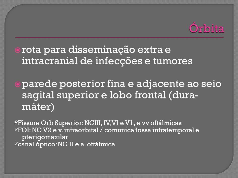 rota para disseminação extra e intracranial de infecções e tumores parede posterior fina e adjacente ao seio sagital superior e lobo frontal (dura- má