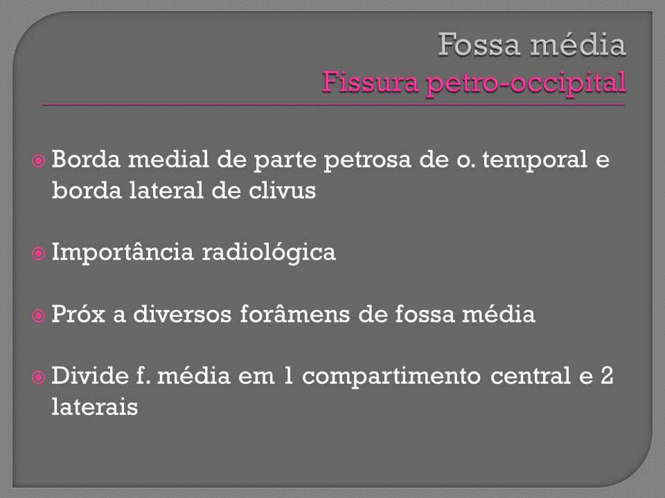 Borda medial de parte petrosa de o. temporal e borda lateral de clivus Importância radiológica Próx a diversos forâmens de fossa média Divide f. média