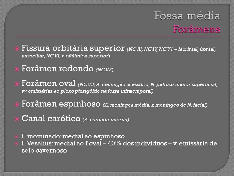 Fissura orbitária superior (NC III, NC IV, NC V1 – lacrimal, frontal, nasociliar, NC VI, v. oftálmica superior) Forâmen redondo (NC V2) Forâmen oval (