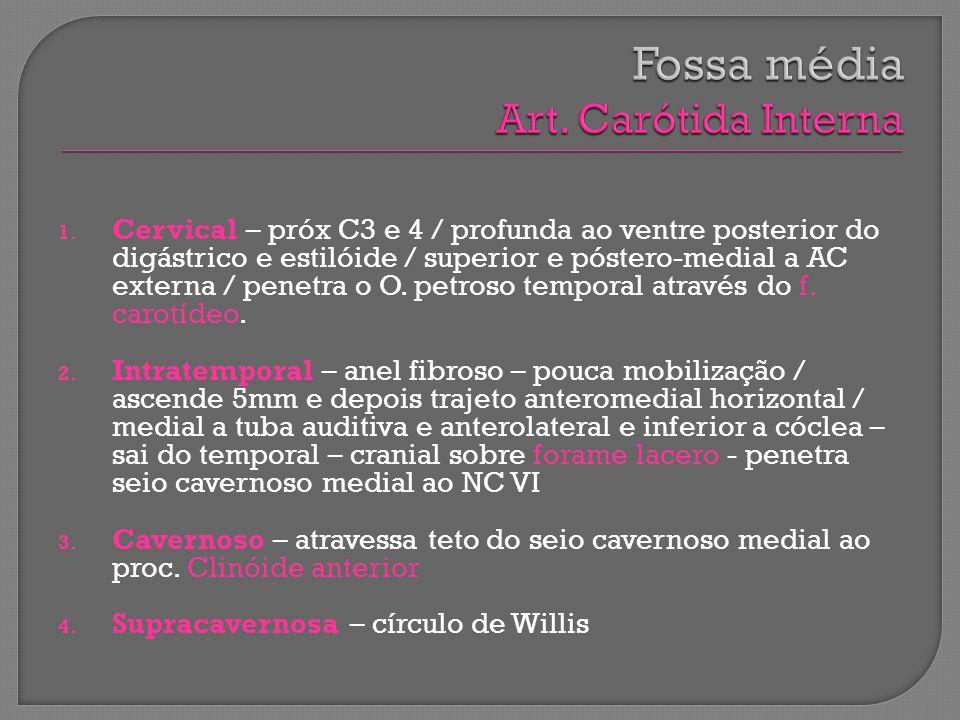 1. Cervical – próx C3 e 4 / profunda ao ventre posterior do digástrico e estilóide / superior e póstero-medial a AC externa / penetra o O. petroso tem