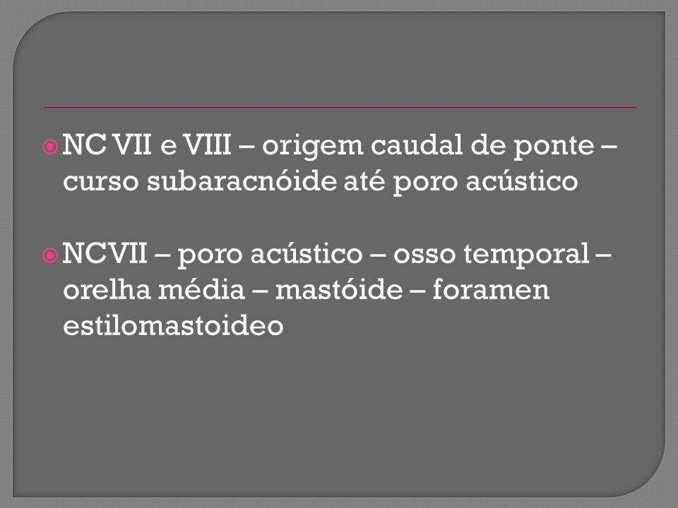 NC VII e VIII – origem caudal de ponte – curso subaracnóide até poro acústico NCVII – poro acústico – osso temporal – orelha média – mastóide – forame