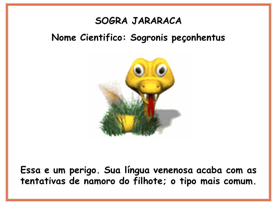 SOGRA JARARACA Nome Cientifico: Sogronis peçonhentus Essa e um perigo. Sua língua venenosa acaba com as tentativas de namoro do filhote; o tipo mais c