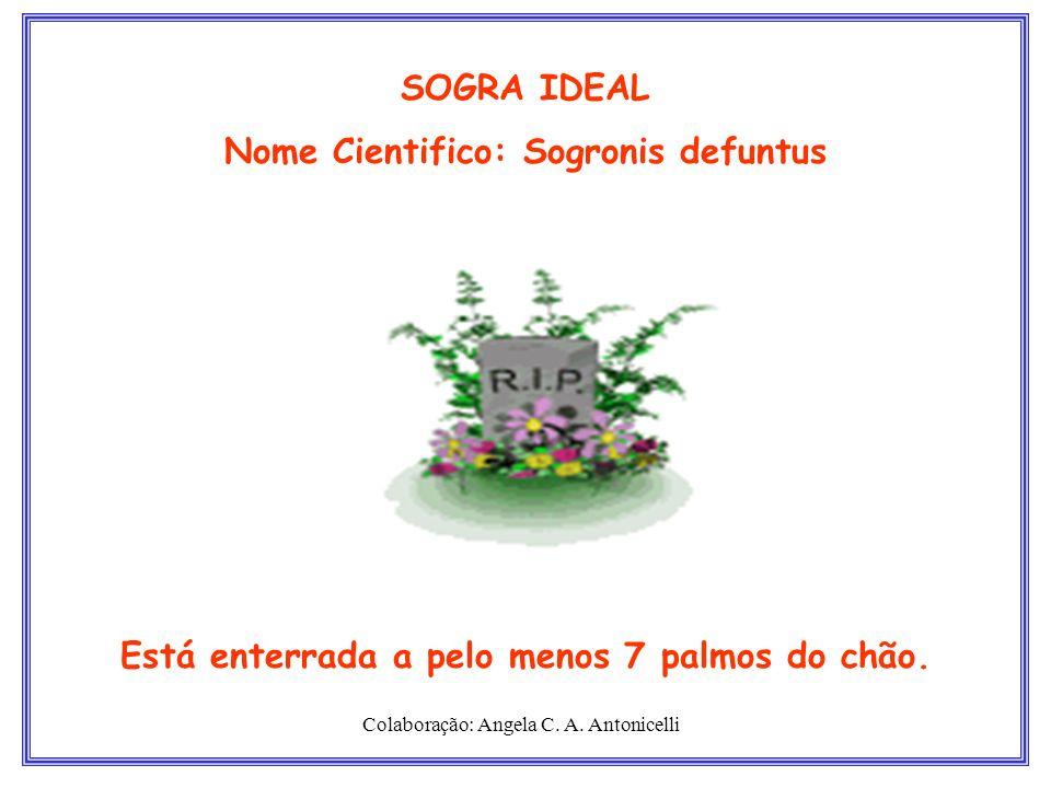 SOGRA IDEAL Nome Cientifico: Sogronis defuntus Está enterrada a pelo menos 7 palmos do chão. Colaboração: Angela C. A. Antonicelli
