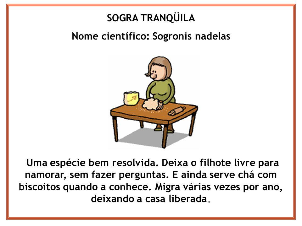 SOGRA JARARACA Nome científico: Sogronis peçonhentus Essa é um perigo.